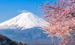 japan-mt-fuji-and-cherry-blossoms